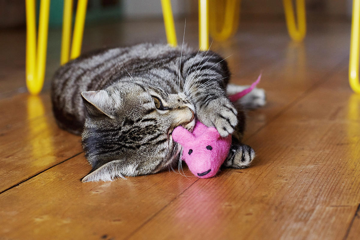 Tabby cat playing with pink rat cat toy