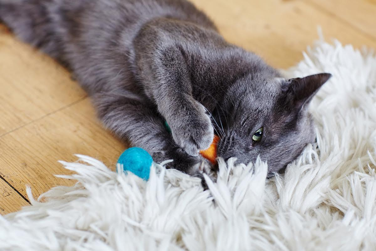 Grey cat with felt ball cat toy from The Natural Pet Toy Company