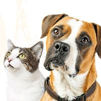 Healthcare For Cats & Dogs