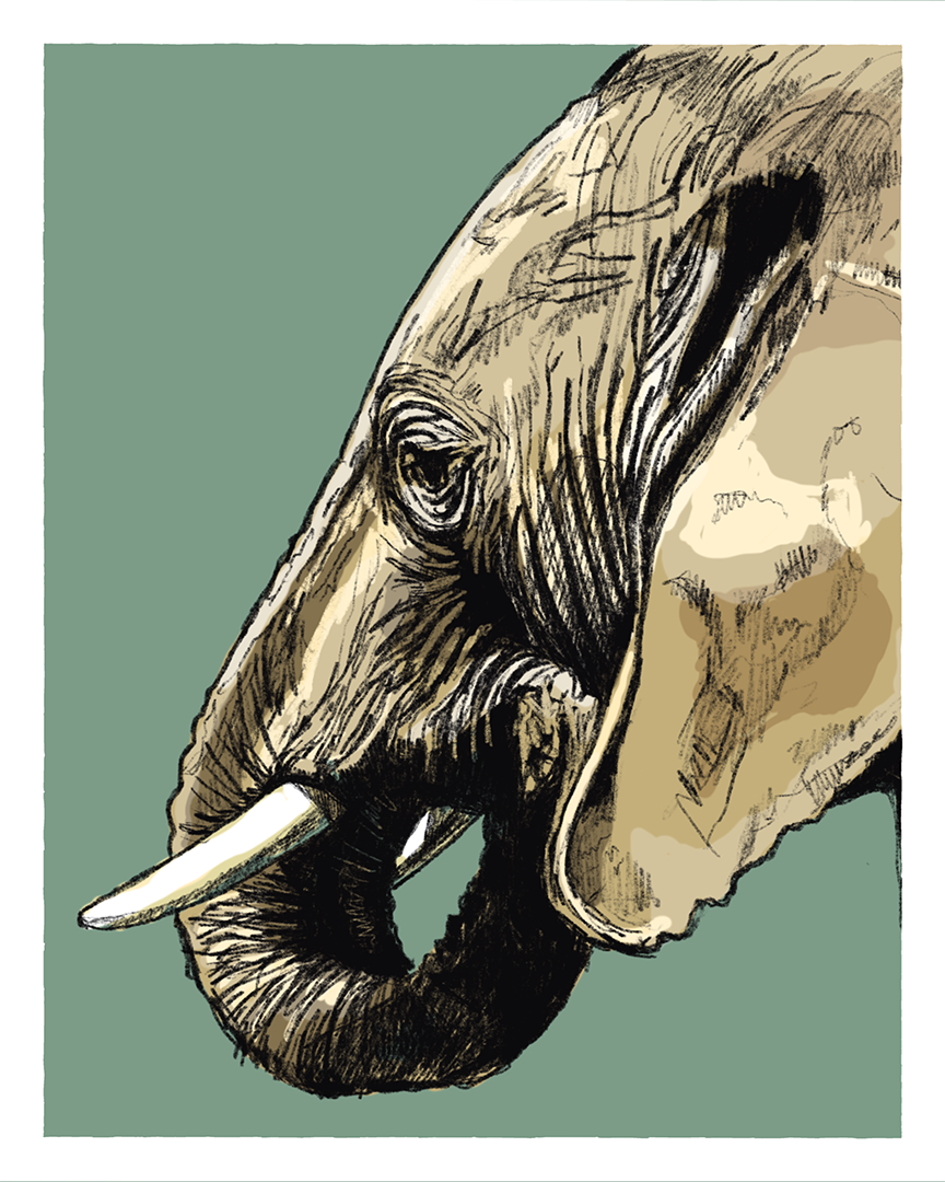 Elephant print from the series Animals of Africa by Tom Laird Illustration