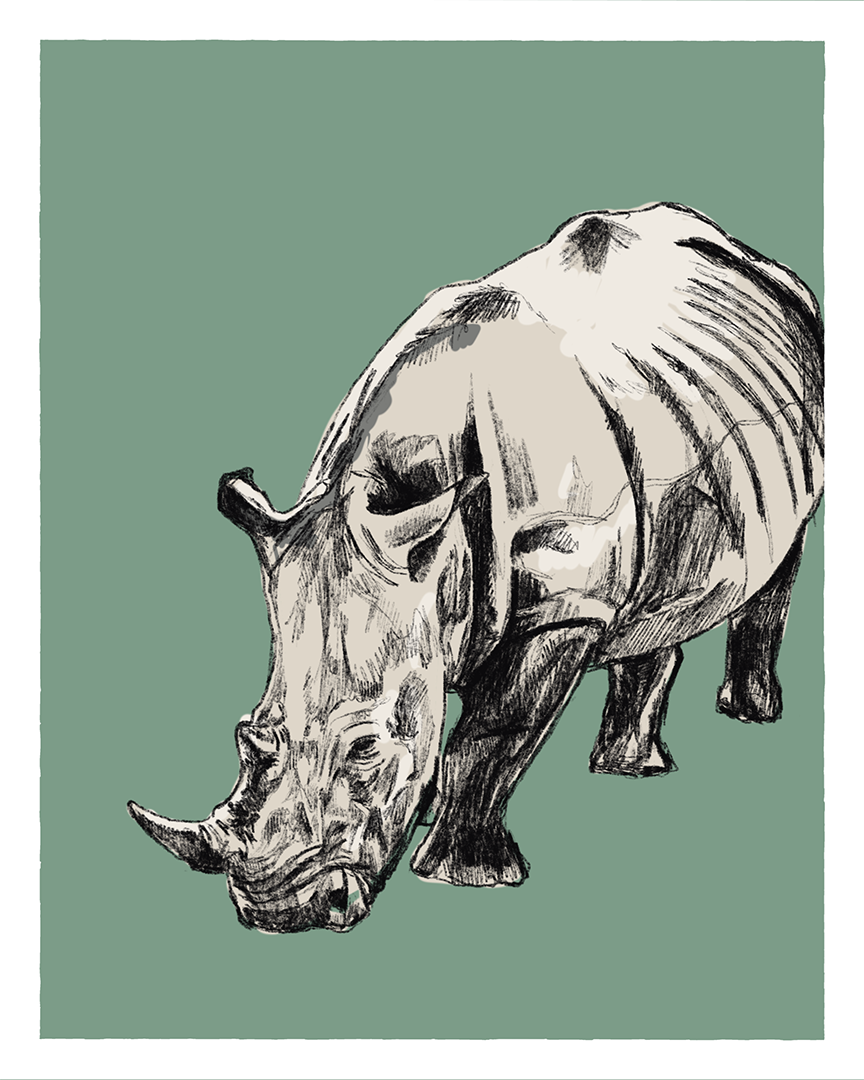 Rhino print from the series Animals of Africa by Tom Laird Illustration