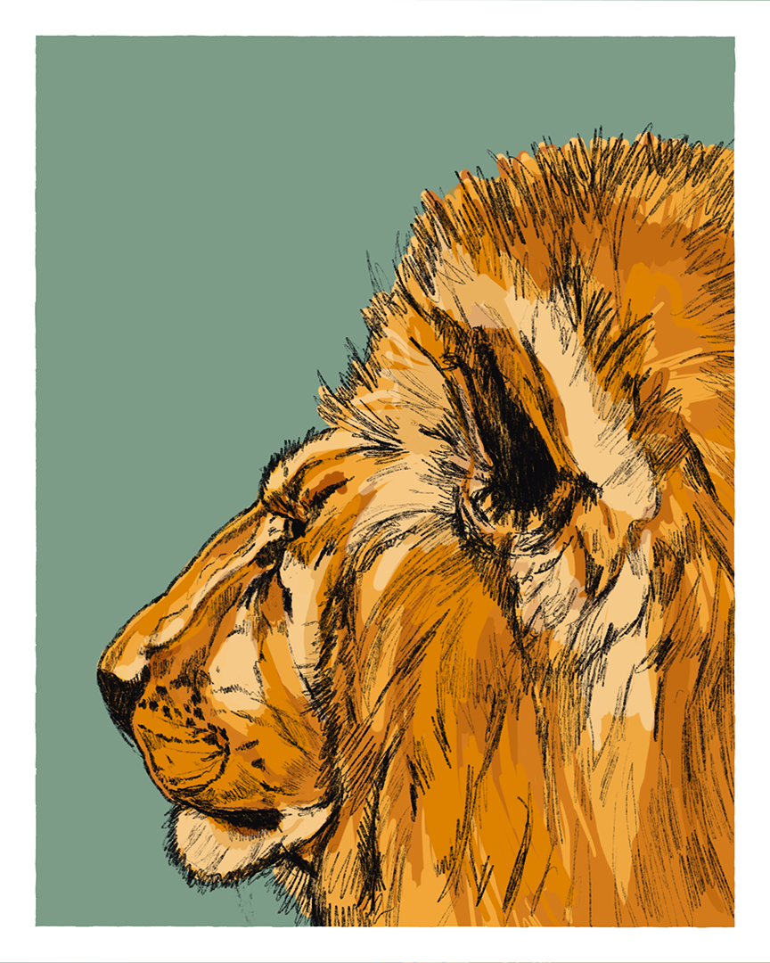 Lion print from the series Animals of Africa by Tom Laird Illustration