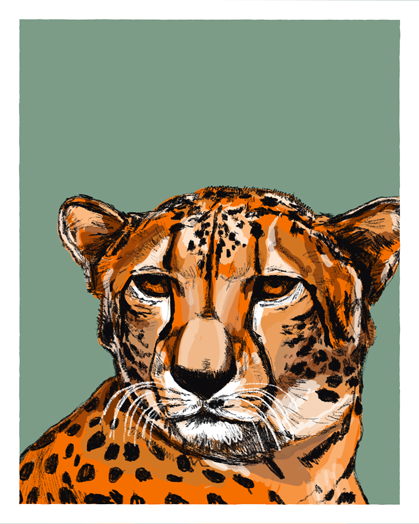 Cheetah print from the series Animals of Africa by Tom Laird Illustration
