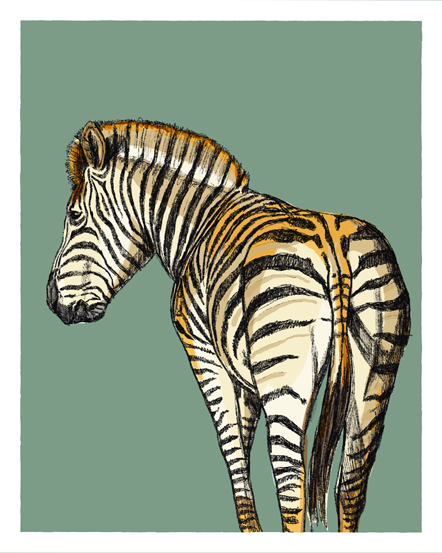 Zebra print from the series Animals of Africa by Tom Laird Illustration