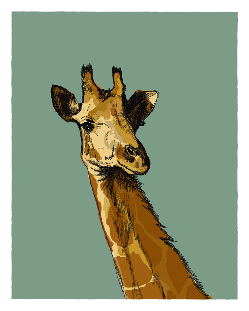Giraffe print from the series Animals of Africa by Tom Laird Illustration