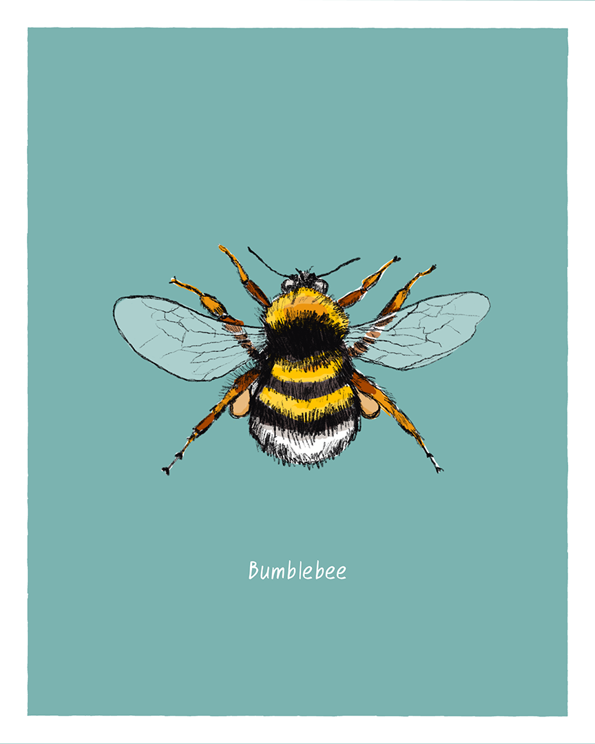 Bumblebee print from the series Pollinating Insects of Great Britain by Tom Laird Illustration