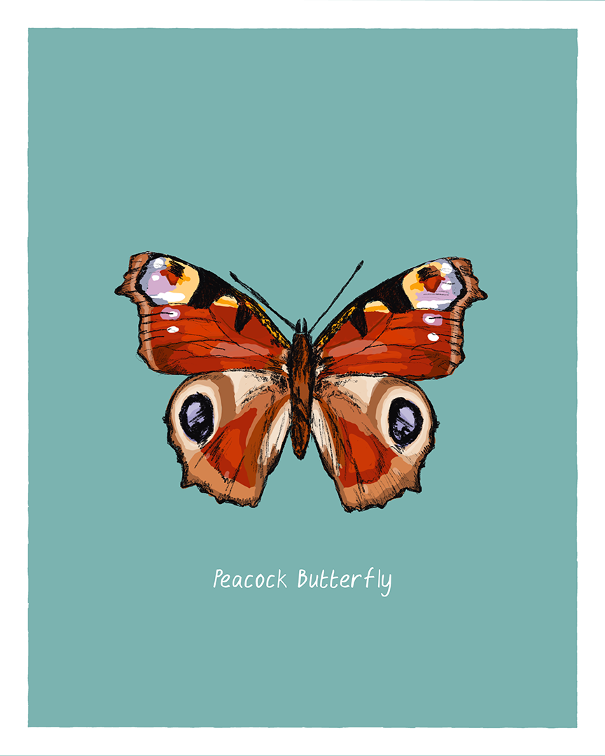 Peacock Butterfly print from the series Pollinating Insects of Great Britain by Tom Laird Illustration