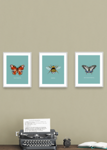 Group of three Pollinating Insects of Great Britain prints by Tom Laird Illustration