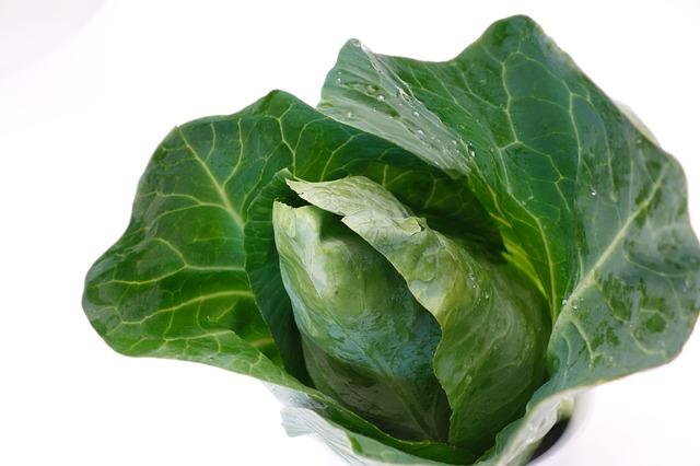 Cabbage (Pointed)