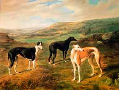 Greyhound Trio Print