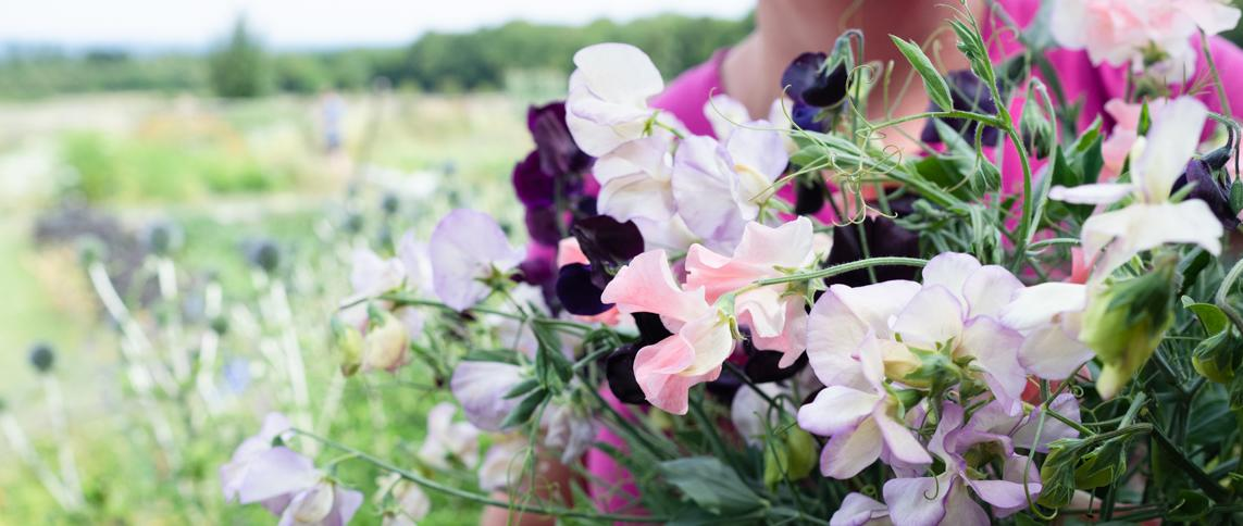 Seasonal, Scented and Sustainable. Picked Fresh from our flower farm in the Surrey Hills