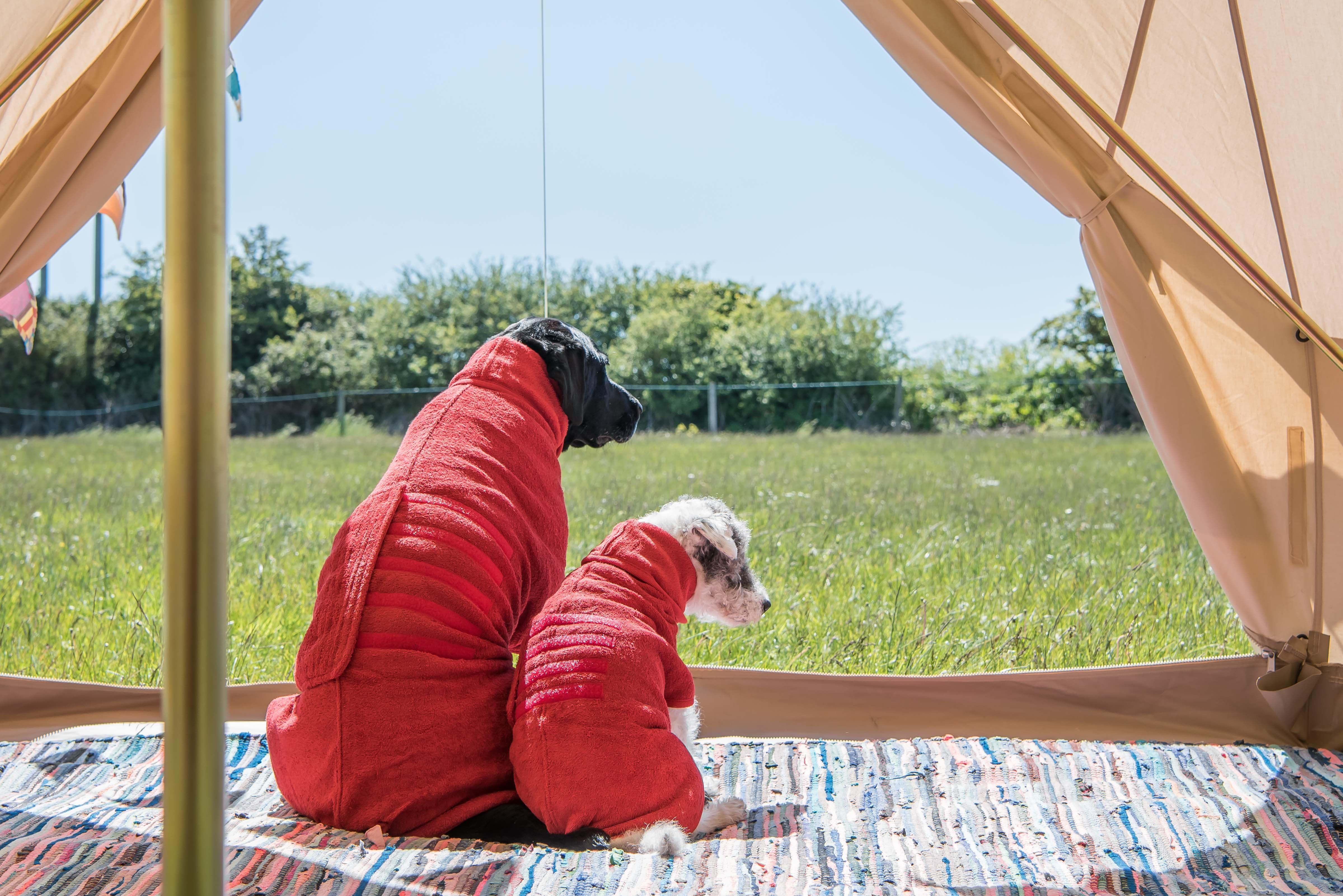 Two dogs in red drying coat
