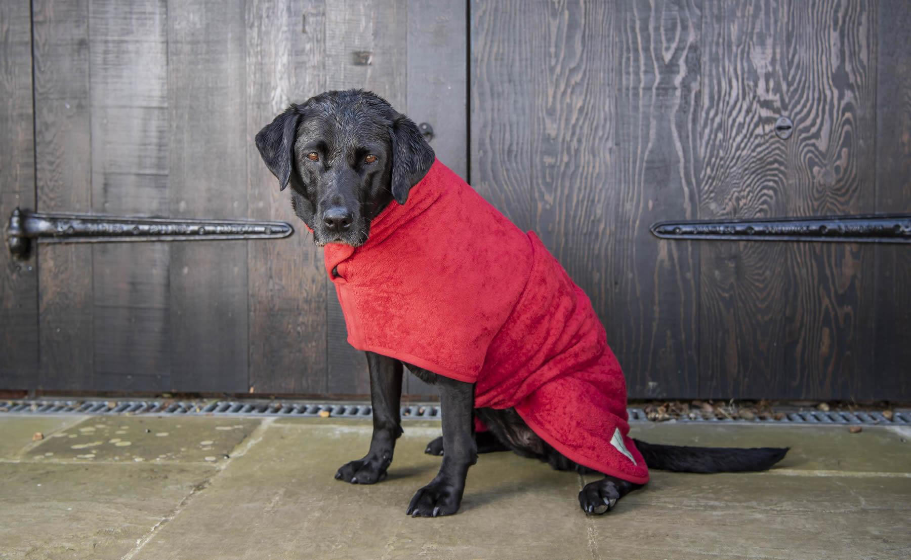Lab in red drying coat