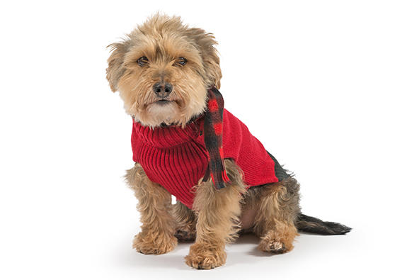 Red Scarf dog Jumper
