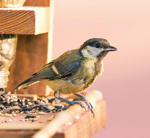 Seven tips to get more birds in your garden