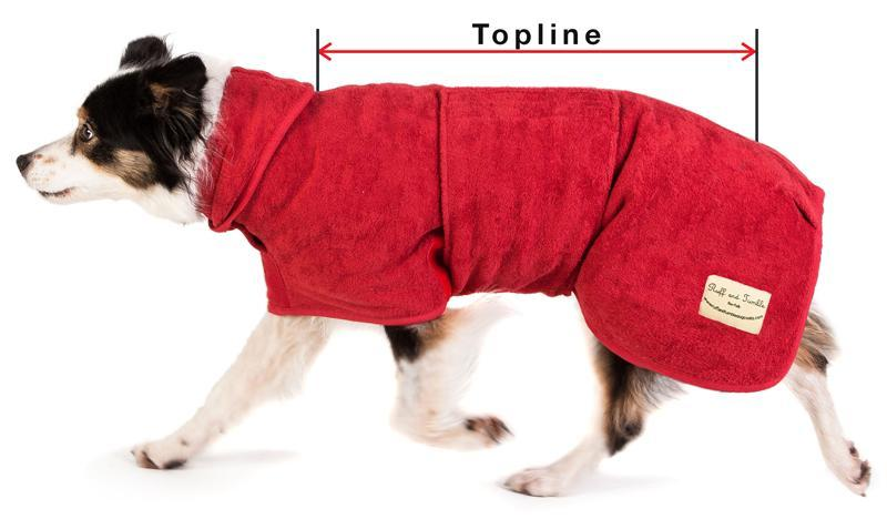 sizing-collie-1024x1024.jpg