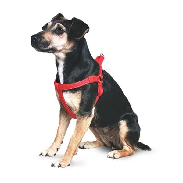 Ancol Red Padded Exercise Harness