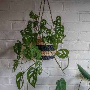 Seagrass Hanging Plant Potat Albert & Moo