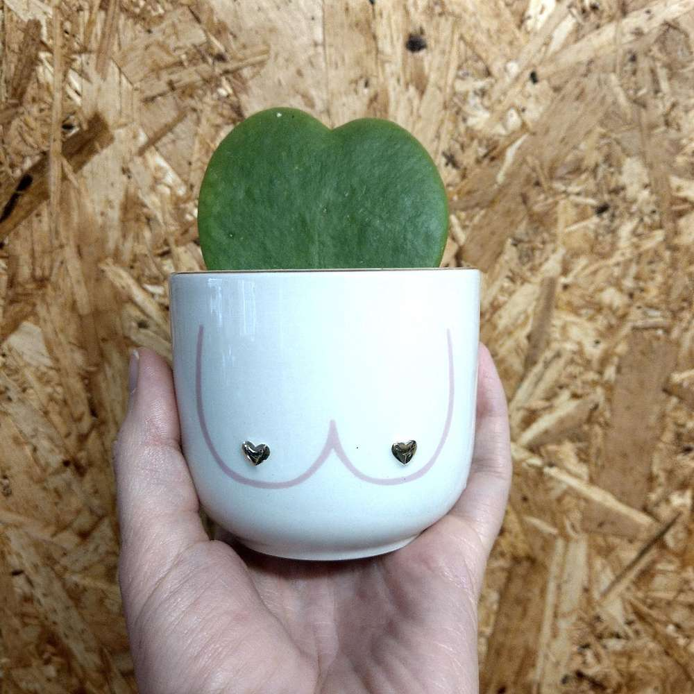 Boobies Mini Plant Pot at Albert & Moo