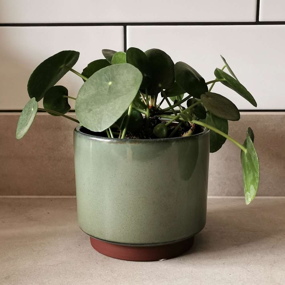 Burgon & Ball Green Mailbu Glazed Plant Pot at Albert & Moo