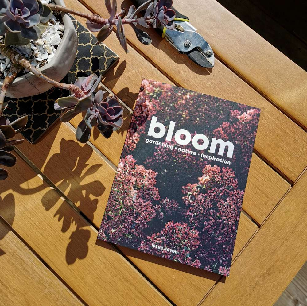Bloom Magazine Volume Seven at Albert & Moo