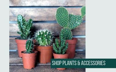 Shop plants & accessories at Albert & Moo