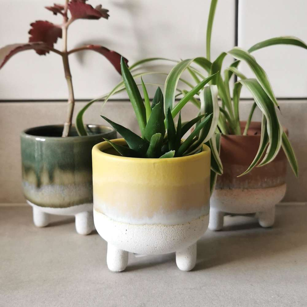 Yellow Mojave Glaze Plant Pot at Albert & Moo