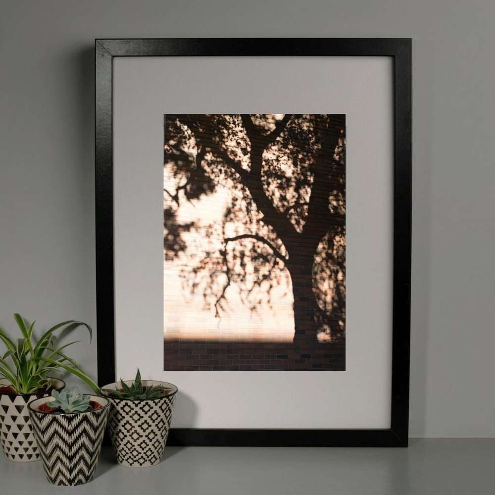 Tree Shadow Photography Print at Albert & Moo