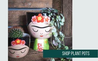 Shop Indoor Plant Pots at Albert & Moo