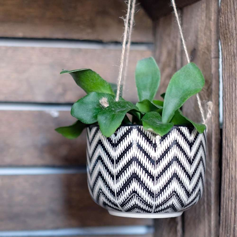 Black Geo Zinnia Hanging Plant Pot