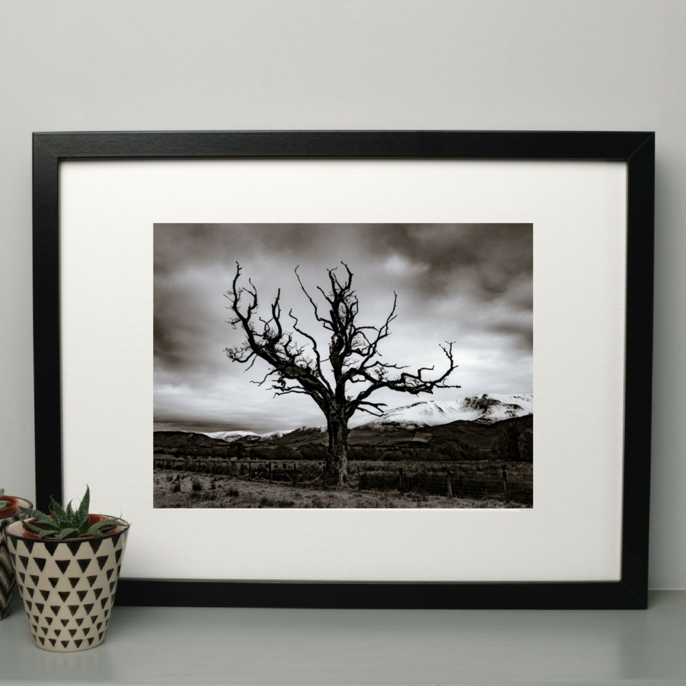 Dead Tree Photography Print at Albert & Moo