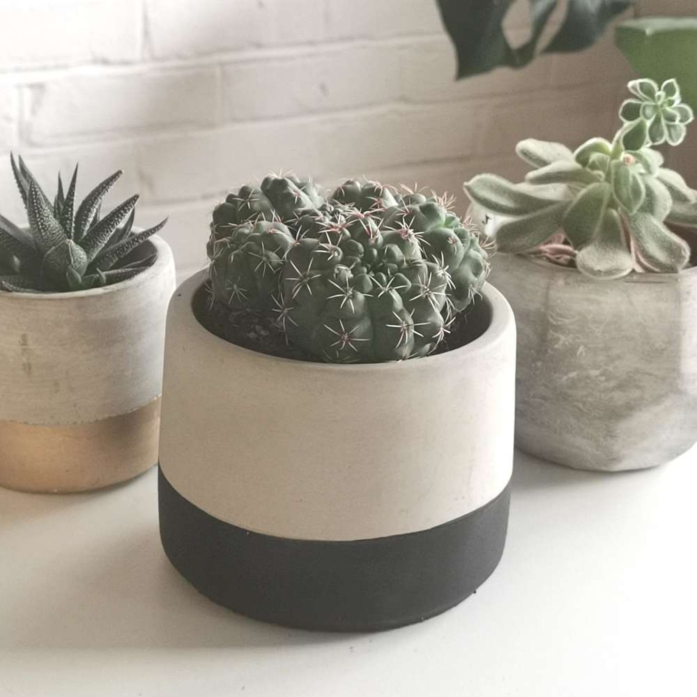 Black Dip Concrete Plant Pot at Albert & Moo