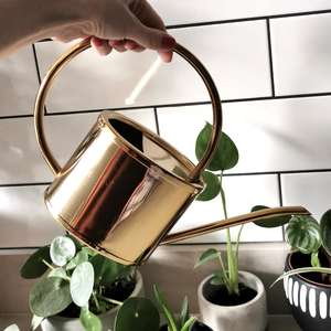 Brass Vintage Style Watering Can at Albert & Moo