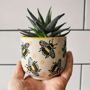 Busy Bees Mini Plant Pot at Albert & Moo