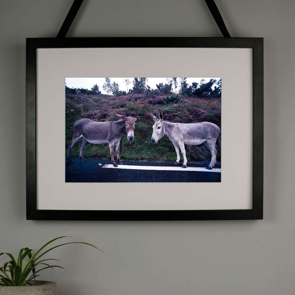 Donkey Gossip Photography Print at Albert & Moo