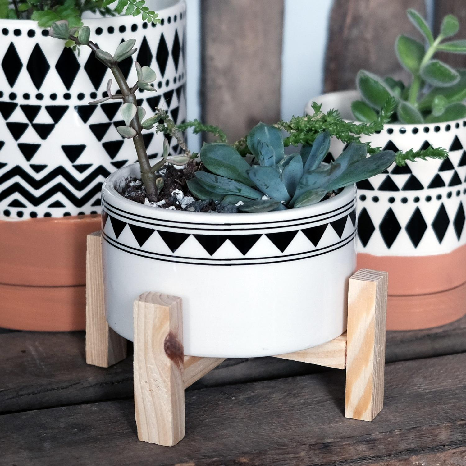 Succulent Trio in Tribal Planter at Albert & Moo
