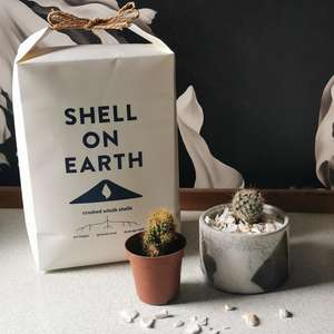 Shell on Earth Recycled Whelk Shells for Plants at Albert & Moo
