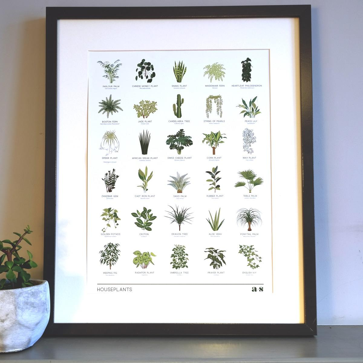 Limited Edition Houseplant Print by Another Studio at Albert & Moo