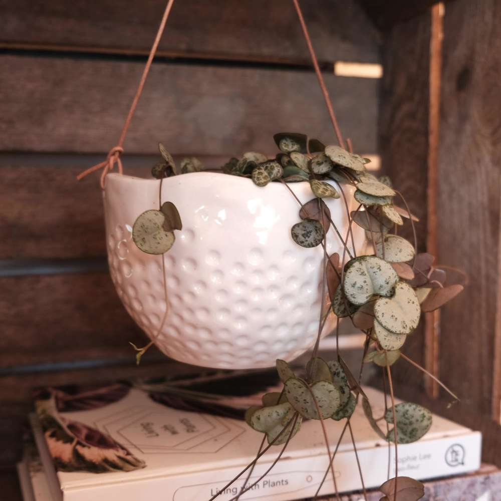 Burgon & Ball Dot Hanging Plant Pot at Albert & Moo