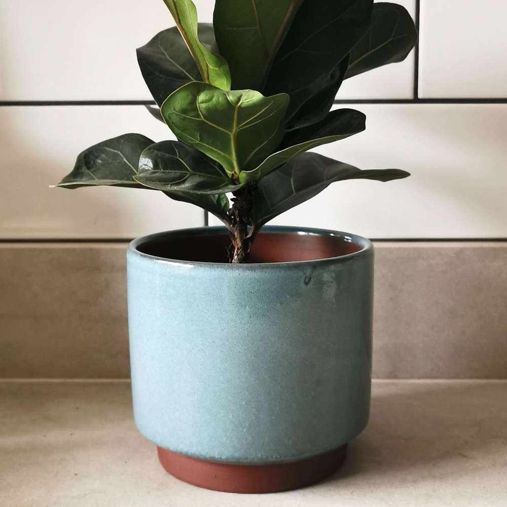 Burgon & Ball Blue Mailbu Glazed Plant Pot at Albert & Moo