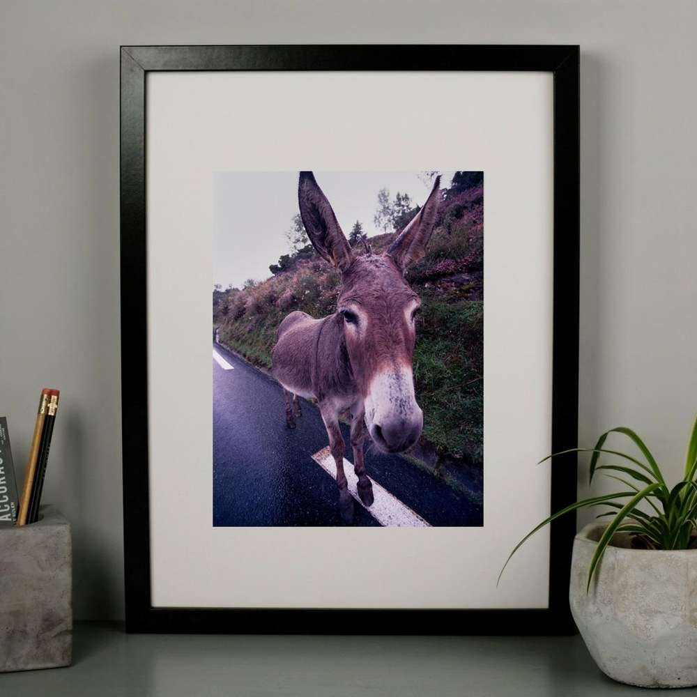 Donkey Stare Photography Print at Albert & Moo