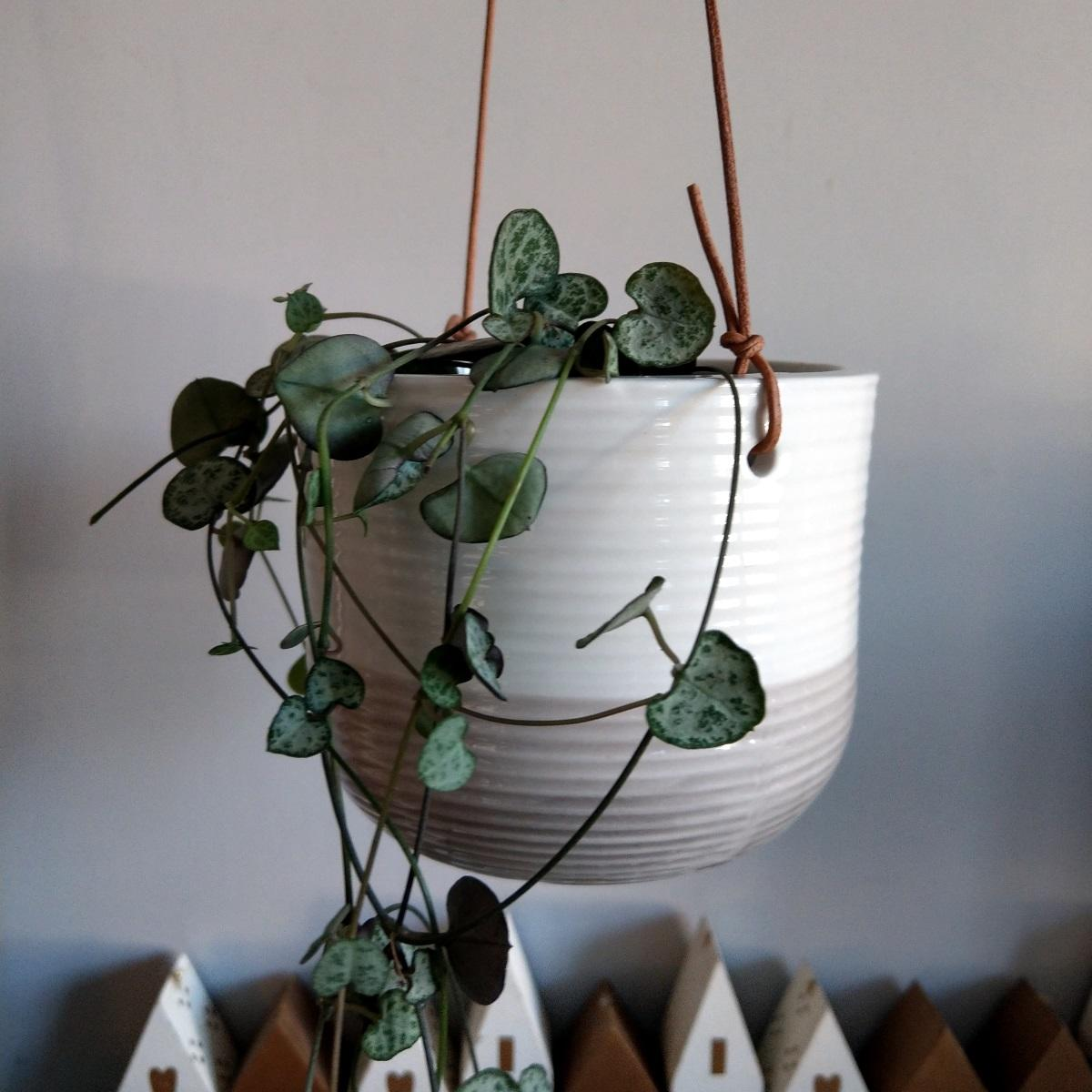 Burgon & Ball Ripple Hanging Plant Pot
