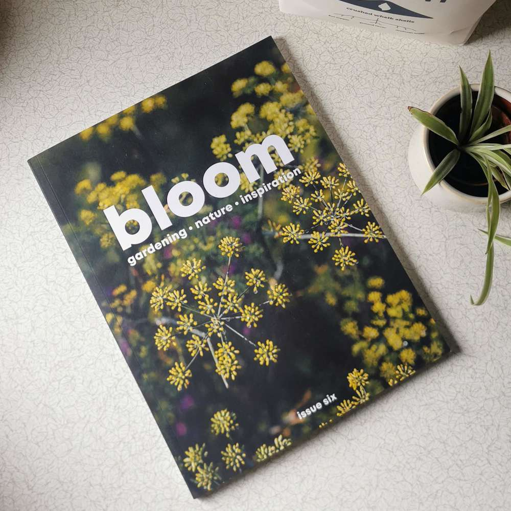 Bloom Magazine Volume Six at Albert & Moo