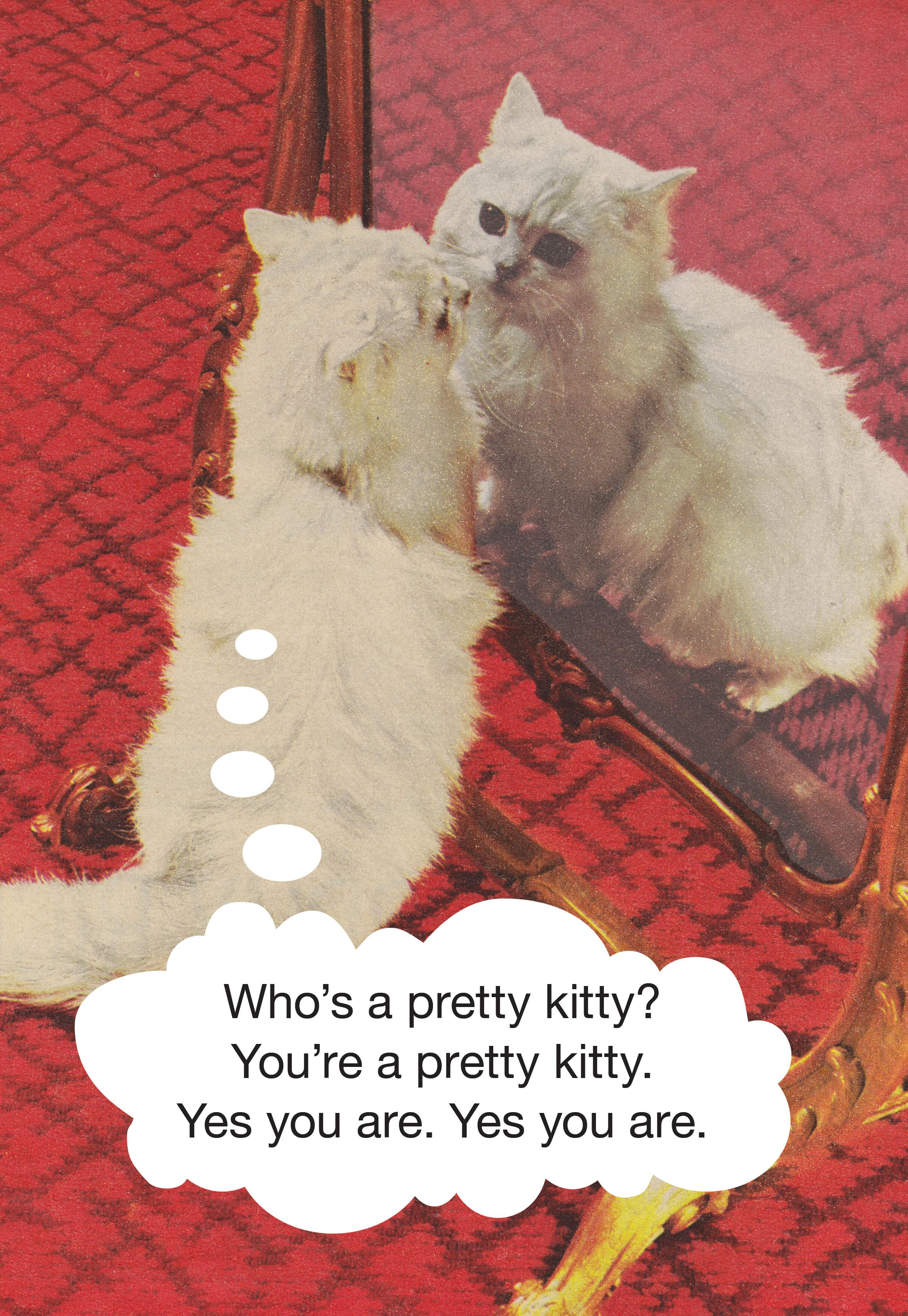 Who's a pretty kitty? You're a pretty kitty. Yes you are.