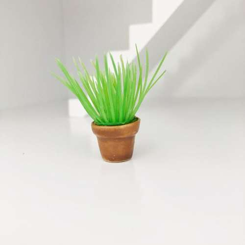 miniature plant, mini plant, green plant, spiky plant