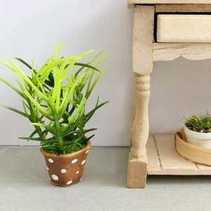 miniature plant, mini plant, dollhouse plant