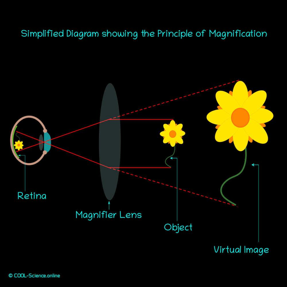 Simplified Diagram showing the Principle of Magnification