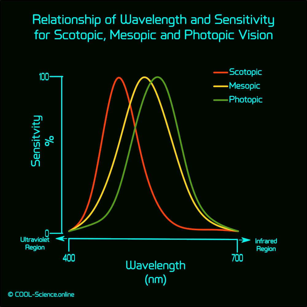 Relationship of Wavelength and Sensitivity for Scotopic, Mesopic and Photopic Vision