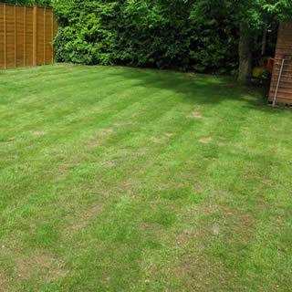 patchy brown lawn