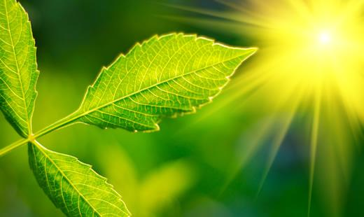 The Low-down on Photosynthesis